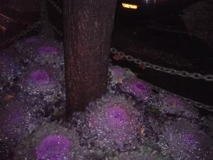 purplealien